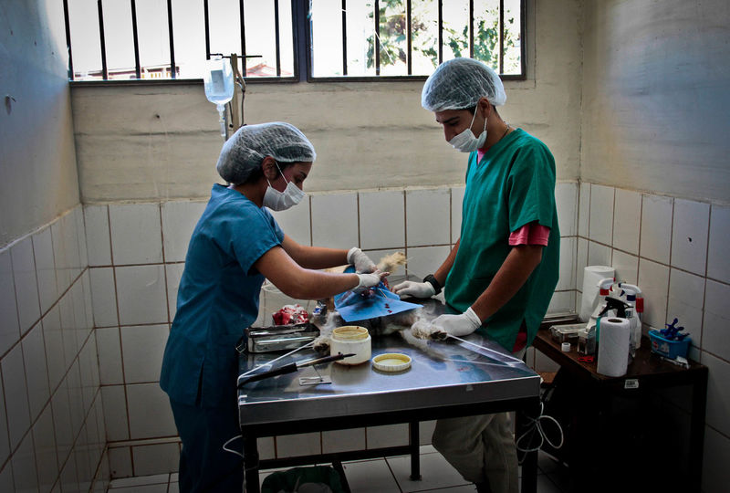 Operando... Two People Working Teamwork Takingphotos EyeEm Gallery Color Photography Surgeryoperation Surgeryroom Veterinaria Veterinary Clinic