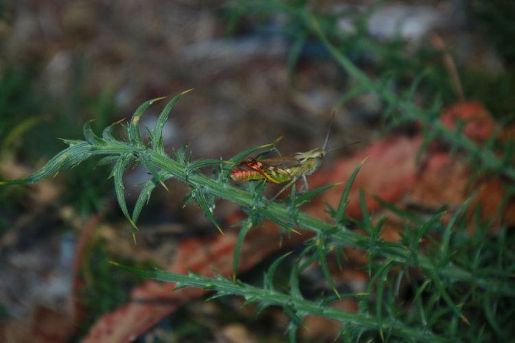 Reptile Leaf