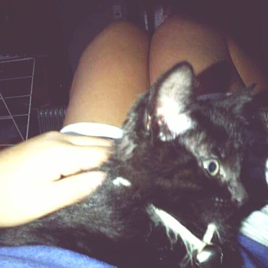 My first cat in NZ, Meet Simba :) Human Body Part One Person Human Hand Adults Only Indoors  One Man Only People Adult Men Only Men Close-up Night Young Adult Girlfriend♥ Lap Nap Cats Of EyeEm Girl Portrait Girltumblr enjoying in my girlfriend's laps at Riccarton New Zealand