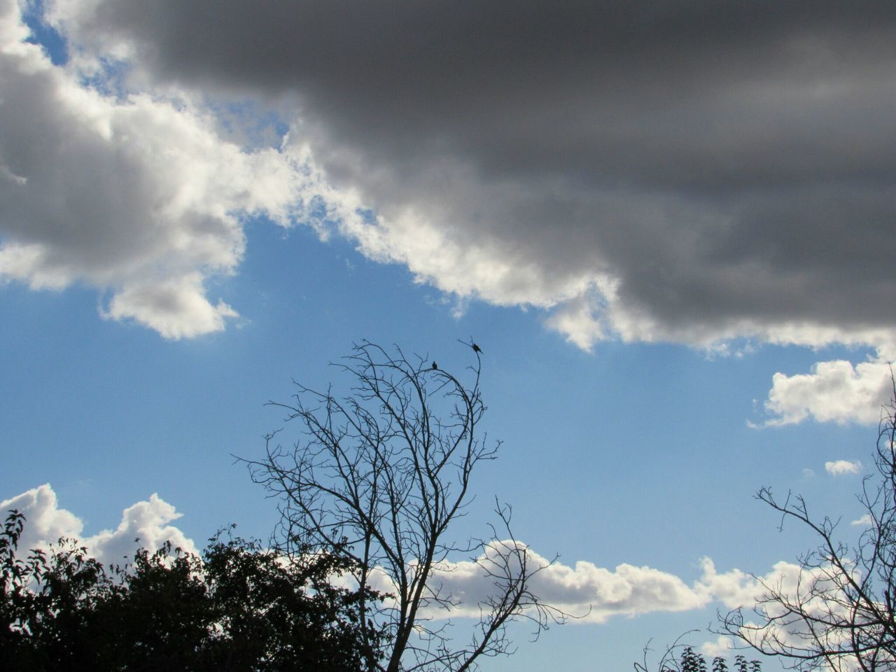sky, low angle view, cloud - sky, tree, day, nature, bare tree, beauty in nature, no people, outdoors, branch, animal themes