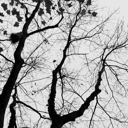 Tree Branch Low Angle View Nature Bare Tree No People Sky Silhouette Outdoors Beauty In Nature Day Bird