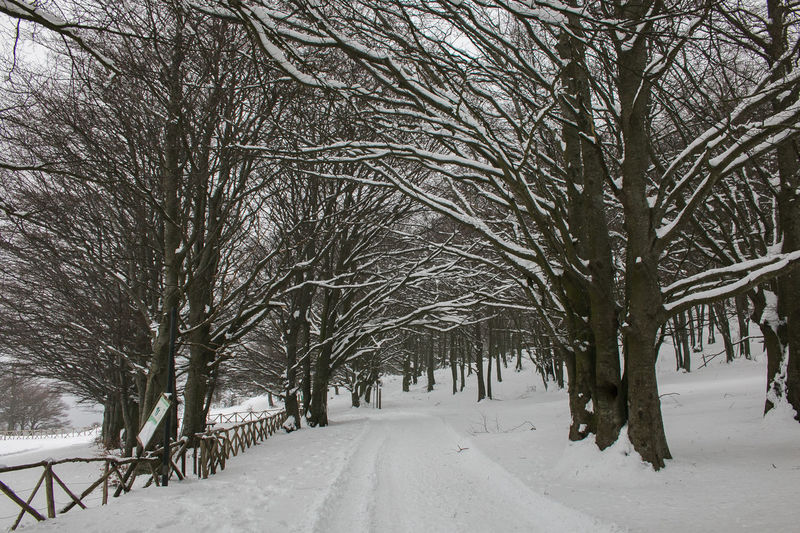 Pathway with snow in the forest Trees Winter Wintertime Beauty In Nature Beech Blizzard Branch Cold Temperature Covering Forest Land Monte Cucco Nature No People Outdoors Pathway Plant Scenics - Nature Snow Tranquility Umbria White Color Wildlife Winter Winter Wonderland