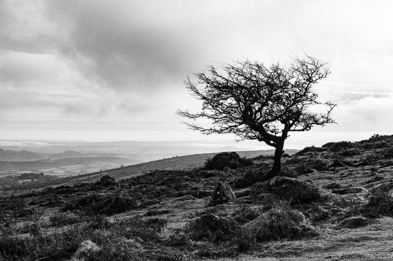 Bare Tree Barren Barren Landscape Beauty In Nature Branch Cloud - Sky Dartmoor Day Desolate Isolated Landscape Lone Nature No People Non-urban Scene Outdoors Remote Scenics Single Tree Sky Tranquil Scene Tranquility Tree Tree Trunk