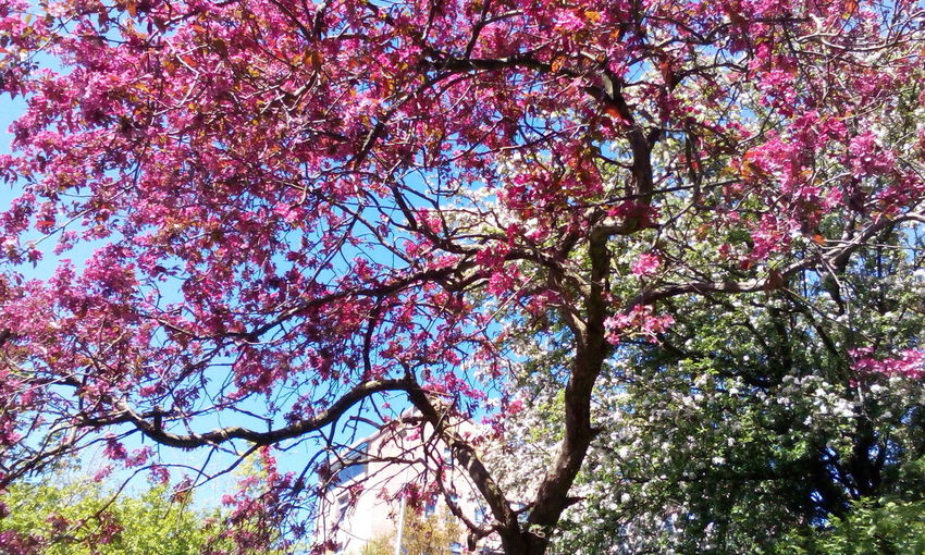 Blossom Blossom
