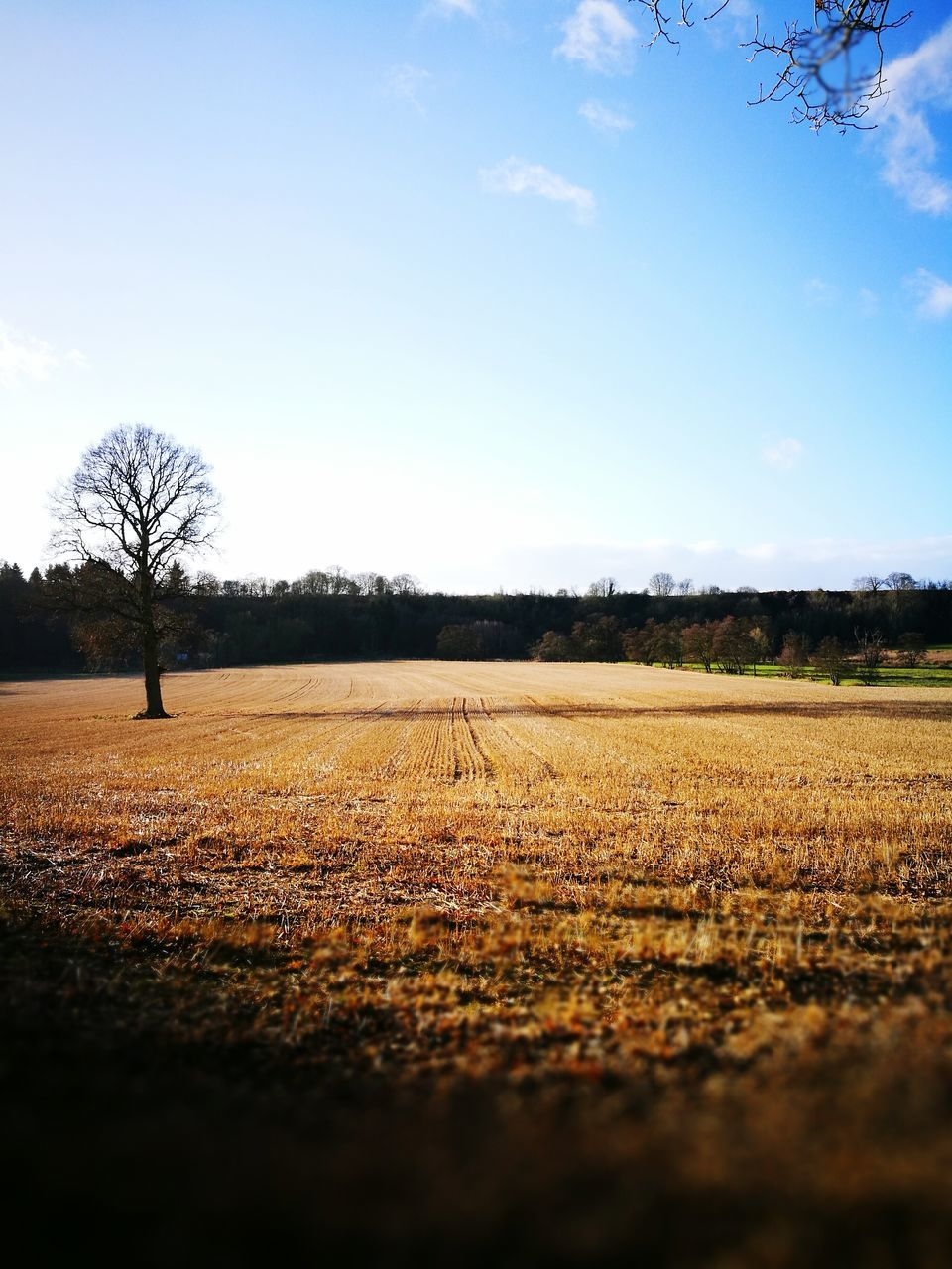 field, landscape, agriculture, tree, beauty in nature, tranquil scene, tranquility, nature, sky, day, plough, outdoors, scenics, bare tree, rural scene, no people, lone