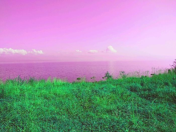 Как вам? отдых природнаякрасота природароссии берегозера берег озеро Природа путешествие Travel трава неожиданность Пляж солнце и писок карелия путь пляж красота удивительноерядом Water Flower Sunset Sea Rural Scene Pink Color Beach Field Sky Grass In Bloom Wildflower