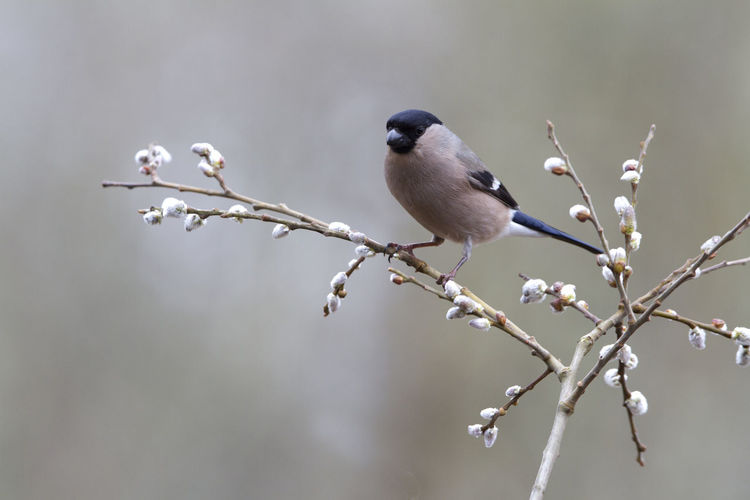 Close-up of bird perching on twig