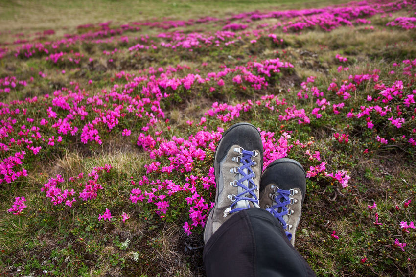 Happy feet in beautiful mountain landscapes. Boots Grass Hiking Relaxing Standing View Feet Flower Flower Head Flowerbed Hike Human Leg Legs Leisure Activity Low Section Mountain Nature One Person Personal Perspective Pink Color Plant Purple Real People Shoes Valley