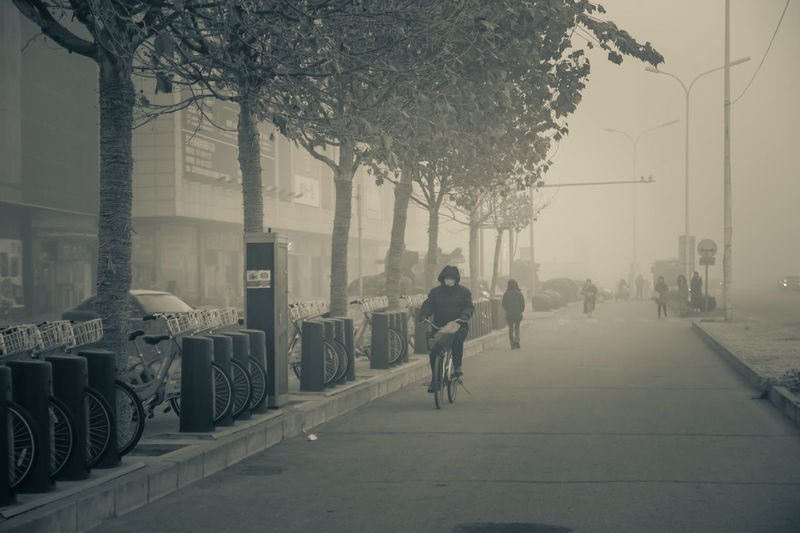 City Politics And Government Tree Fog Bicycle Cycling Cityscape Sky