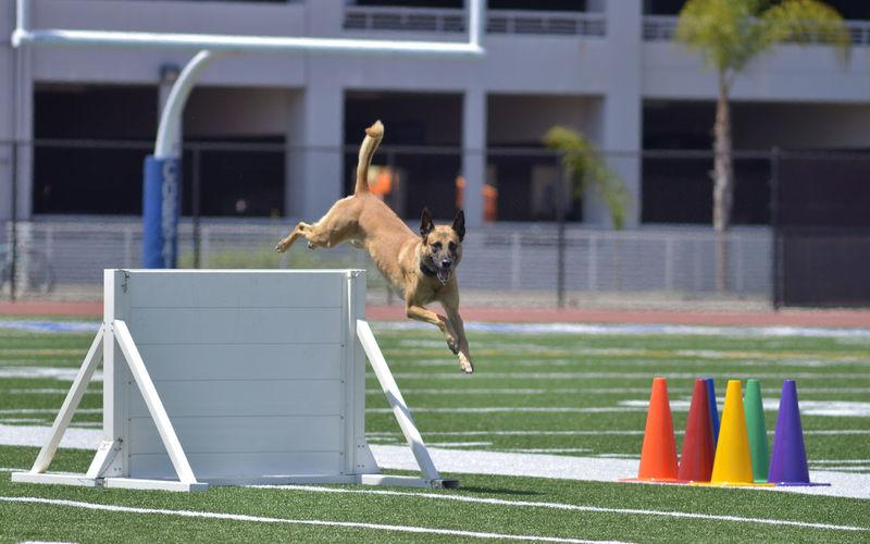 Dog jumping on landscape