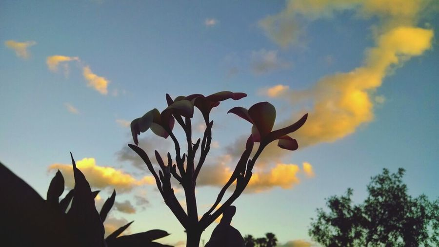 Have a nice tuesday / Join me! :) Flower View Sunset Sky