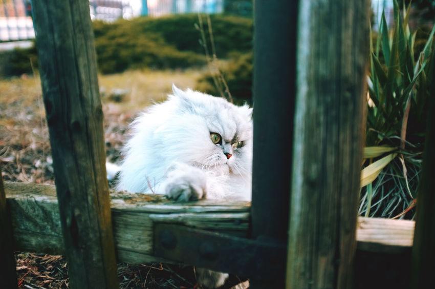Animal Head  Cat Close-up Cute Domestic Cat Entspannung Hauskatze Haustier Katze Niedlich Pets Pfote Relaxation Ruhen Tier