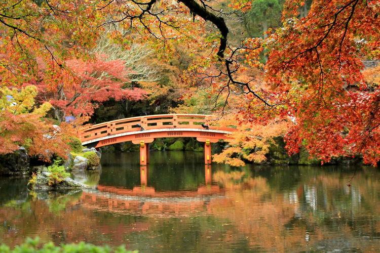 Bridge over lake amidst trees in japanese garden