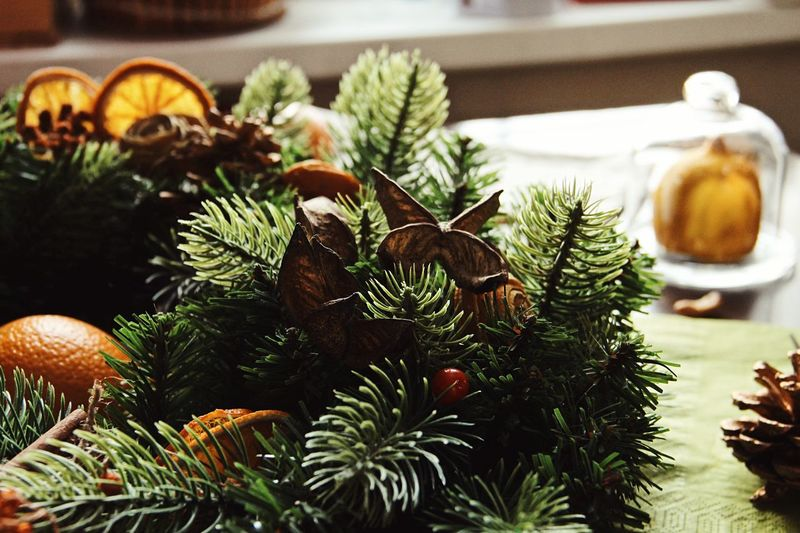Christmas tree christmas tree Plant Tree No People Christmas Nature Growth Decoration Holiday Close-up Christmas Decoration Beauty In Nature Focus On Foreground christmas tree Coniferous Tree Indoors  Christmas Ornament Green Color Celebration Freshness Flower