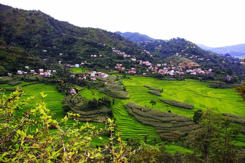 During monsoon PhotoNepal Plant Landscape Growth Agriculture Environment Rural Scene Field Scenics - Nature Beauty In Nature Mountain Green Color Nature Tranquil Scene Tranquility Terraced Field Land The Traveler - 2018 EyeEm Awards