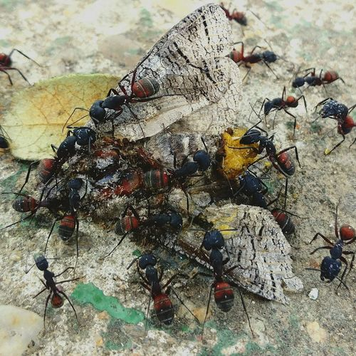 Ants Ant Ants Feasting Large Group Of Animals Animal Themes Outdoors No People Close-up Nature Day