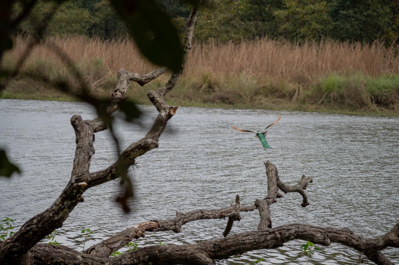 DEAD TREE IN LAKE