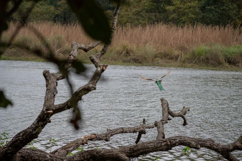 Dead tree by lake