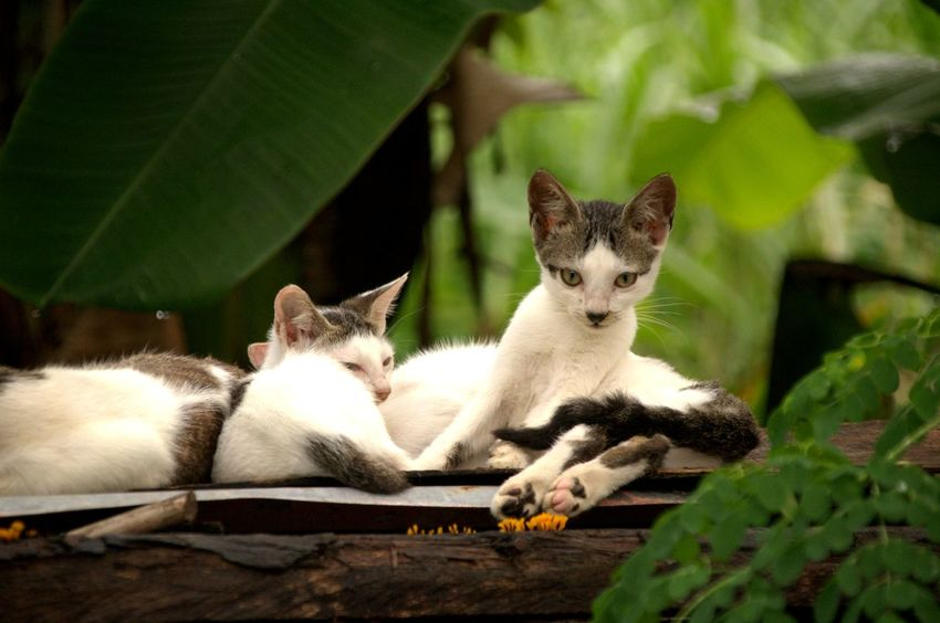Animal Themes Cat Cat Lovers Domestic Animals Domestic Cat Feline Feline Portraits Fiercefelines Looking At Camera Nature No People Outdoors Pets Portrait Sitting