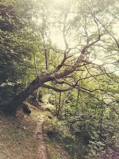 under the Trees Mognio-Bignasco Tessin And I