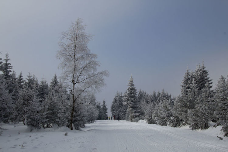 Winter is far from over - winter landscape in the Ore Mountains Shades Of Winter Beauty In Nature Cold Temperature Coniferous Tree Day Forest Frozen Landscape Mountain Nature Outdoors Pine Tree Polar Climate Scenics Sky Snow Snowing Tranquil Scene Tree Winter Winter Landscape Winter Wonderland