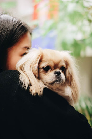 One Animal Canine Dog Mammal Pets Domestic Domestic Animals Lap Dog One Person Small Hair Shih Tzu Focus On Foreground Looking Child Portrait Real People Teenager Innocence Pet Owner Adolescence