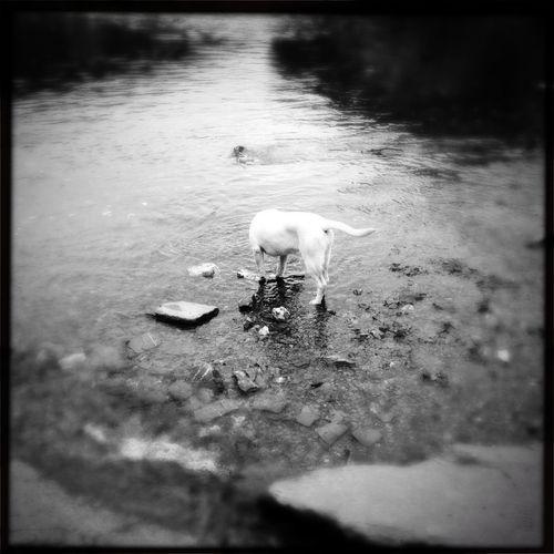 Chien Dog La Semois river