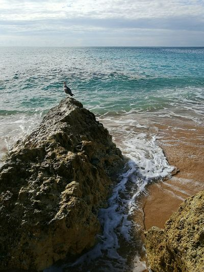 Sea Beach Water Nature Beauty In Nature Horizon Over Water Scenics Wave Sand Tranquility Sky Outdoors Day Tranquil Scene No People Rock Bird Front Of The Sea