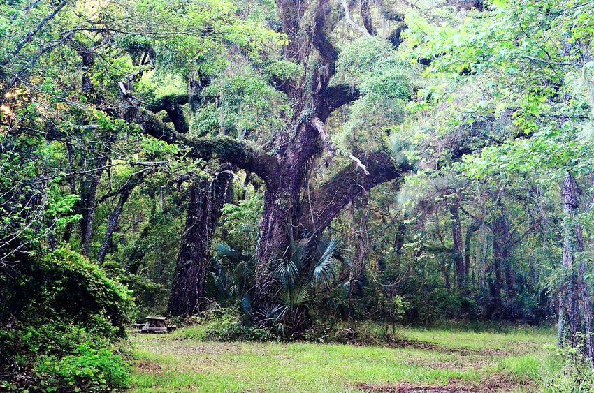 Photogra-tree Taking Photos Enjoying Life Hanging Out
