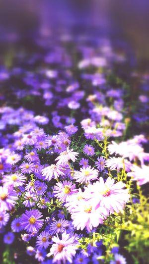 Flowers Sunny
