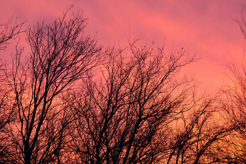 Nature Pink Tree Backgrounds Bare Tree Beauty In Nature Branch Brauty Low Angle View Nature No People Outdoors Purple Scenics Silhouette Sky Sunset Tree