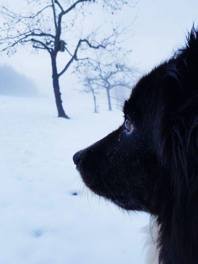 unterwegs im #nebel . #australianshepert #hund #dogs #nature #gefährten #saarland #december #schnee #winter #snow Mammal Snow