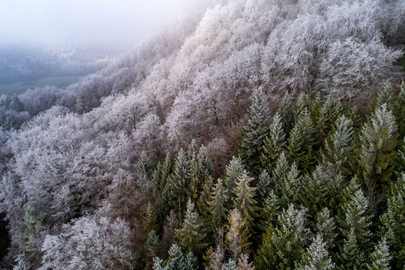 aerial shot of frozen forest with ice covered trees Beauty In Nature Cold Temperature Coniferous Tree Day Environment Evergreen Tree Forest Frosty Frozen Tree Land Mountain Nature No People Outdoors Pine Tree Pine Wood Pine Woodland Plant Scenics - Nature Snow Snowing Tree Treetop Winter WoodLand