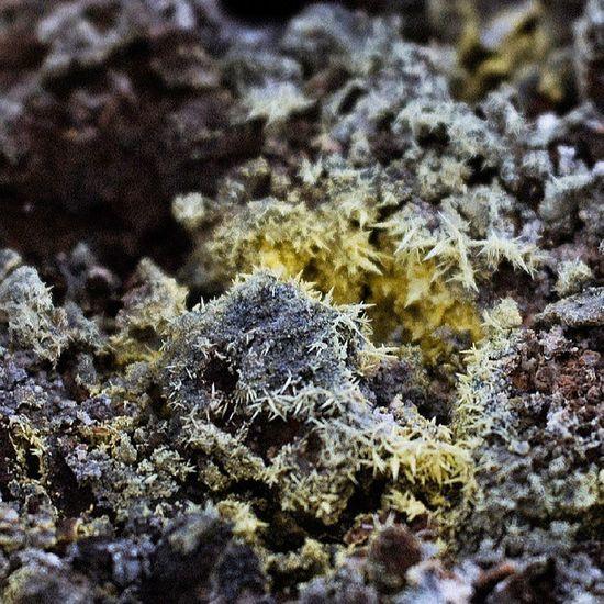 Crystalized Sulfid Macro Mytravelgram mystic travelingram travelphotography mountain vulcano asia Taipei taiwan nikond600 photooftheday picoftheday nature 陽明山 台灣 台北