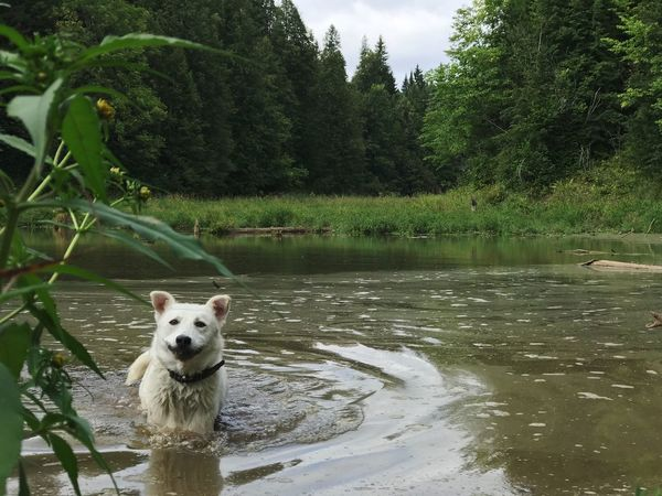Animal Themes Water Animal Mammal One Animal Plant Tree Vertebrate Canine Nature Dog Lake Pets