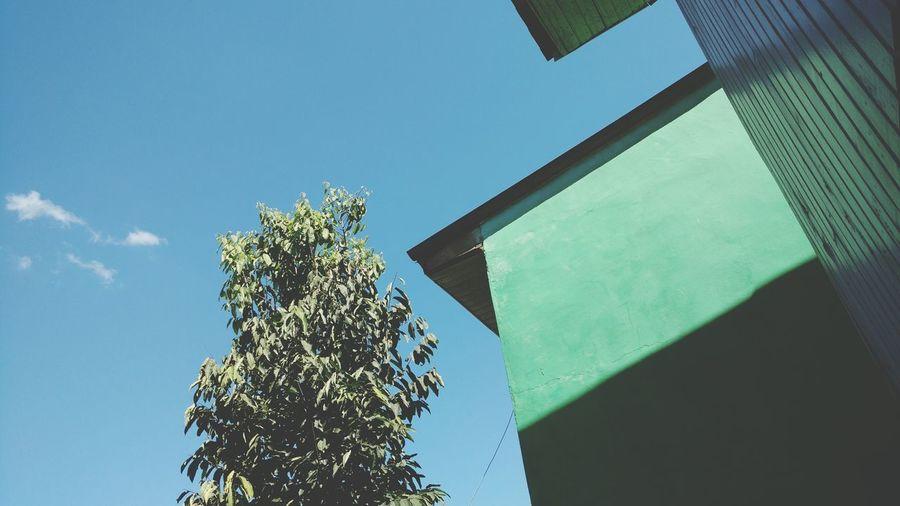 Tree Blue Clear Sky Sky