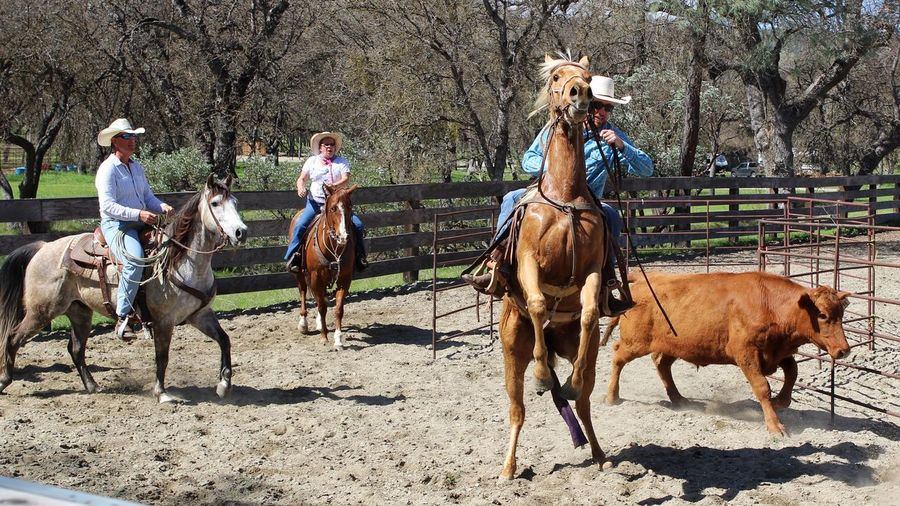 Over Excited! Tadaa Community Ranch Life Ranch Cowboy Domestic Animals Livestock Mammal Working Animal Horse