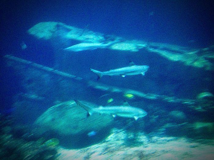 Sharks Sharks Blue No People Water Sea Nature Backgrounds Night UnderSea Underwater
