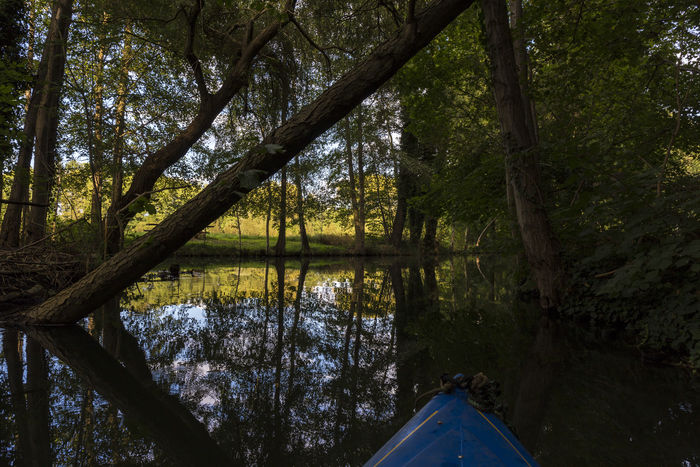 Canoe Canoe Trip Canoeing Beauty In Nature Canoe & Trees Canoe And Water Canoe Lake Canoe Paddling Forest Lake Mysticism Nature Reflection Spreewald Tranquil Scene Tranquility Tree Water Water Sports Water Sports Beauty Outdoors