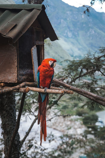 Bird perching on house