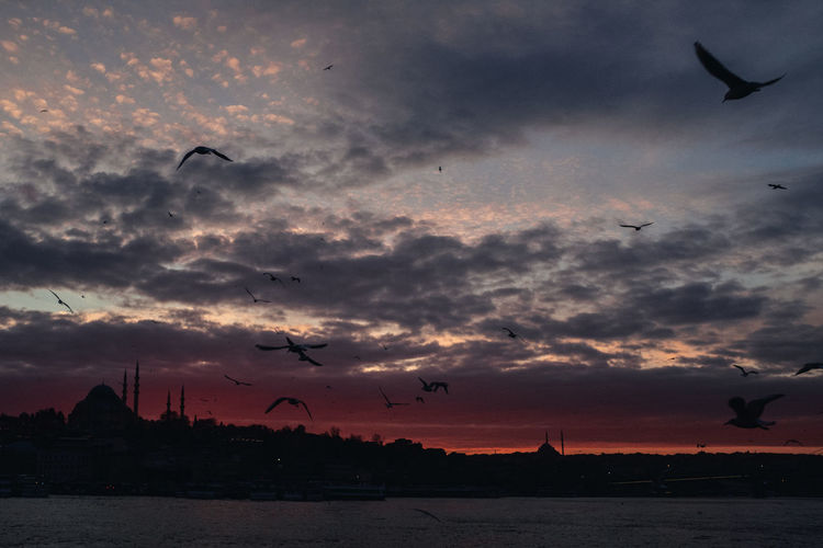 Cloud - Sky Sunset Sky Bird Vertebrate Flying Animal Animal Themes Animals In The Wild Group Of Animals Animal Wildlife Nature Silhouette Beauty In Nature Water Large Group Of Animals Mid-air No People Orange Color Outdoors Flock Of Birds Sea Gull Istanbul Golden Horn Mosque