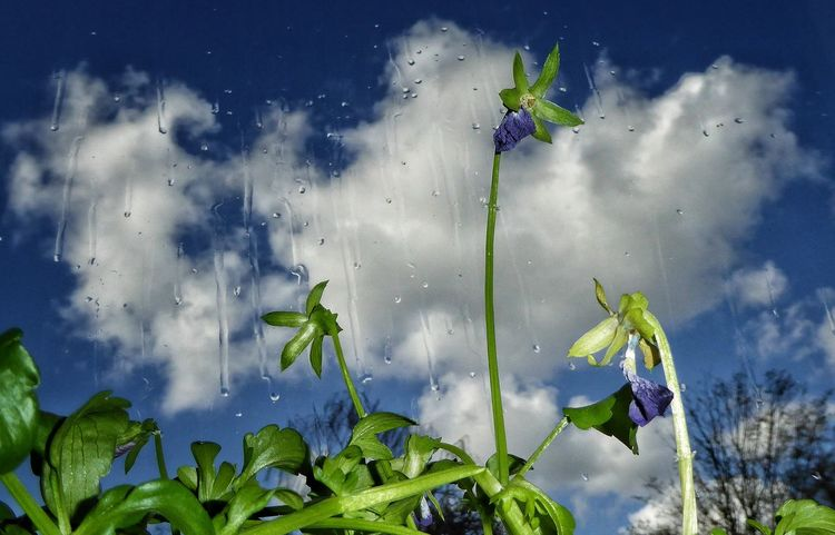 Faded At The Window Clouds And Sky Raindrops Plant Nature Sky Beauty In Nature No People Moment Authentic Moments Close Up Photography Windows Taking Photos StillLifePhotography From My Point Of View CaptuteTheMoment