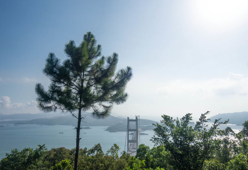 Tsng Ma bridge as seen from top of Tsing Yi Nature trail Aerial Shot Architecture Drone  Hiking HongKong Mountain View Nature Travel Travel Photography Tsing Ma Bridge Tsing Yi Wanderlust Aerial View Bridge Bridge - Man Made Structure China Day Trip Dji Dronephotography Landscape Mountain Nature_collection Southeastasia Suspension Bridge Travel Destinations