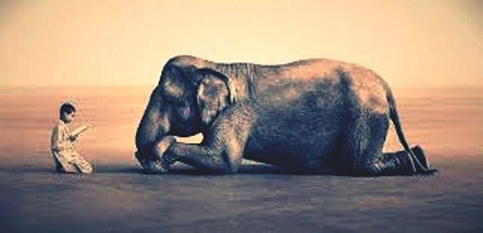 Animal Time :-)