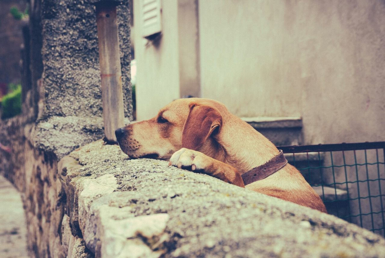 Dog is waiting for someone