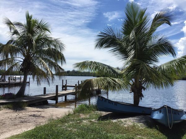 Boat rentals Honest John's Fish Camp Nautical Vessel Palm Tree Mode Of Transport Scenics Small Boat Shoreline Boat Dock Palm Tree Tranquil Scene Fish Camp Shorelines