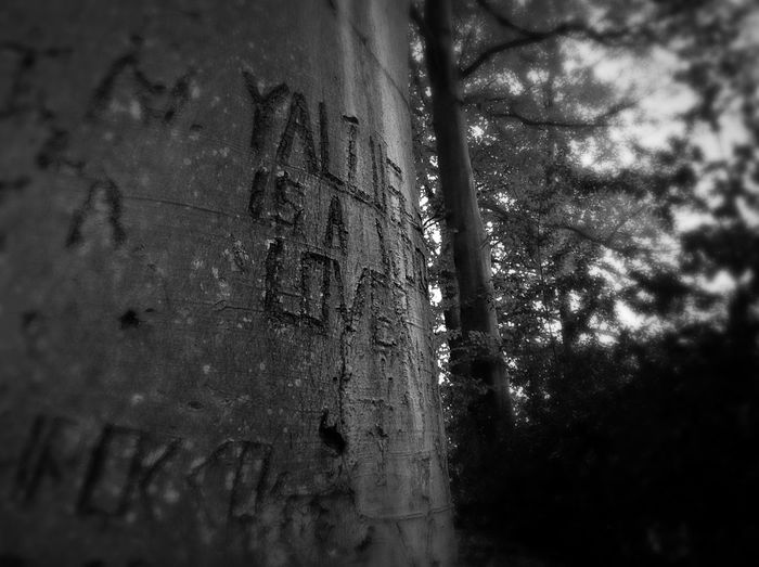 Someone has graffitied on the trees! Naughty naughty :p Trees Walking Around WoodLand Woods Forest Graffiti Relaxing Taking Photos First Eyeem Photo First Eyeem Photo