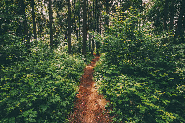 Beautiful Path Lane Walkway Way In Summer Forest Park. Healthy Walking In Park Between Woods, Trees And Green Bushes. Walkway Foliage Nature Direction Growth Forest Plant Tree Summer Woods Green Lane Beautiful Bushes Trunk The Great Outdoors - 2019 EyeEm Awards