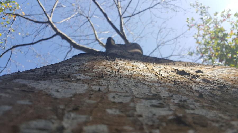 Tree Trunk Low