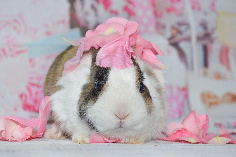 Animal Themes One Animal Mammal Pets Rodent Close-up Pink Color No People Hamster Domestic Animals Portrait Day Outdoors Rabbit Bunny  Bunny 🐰 Rabbits Loveanimals Photography Pink Flower Roses Pet Photography  Petals Petals🌸 Petstagram
